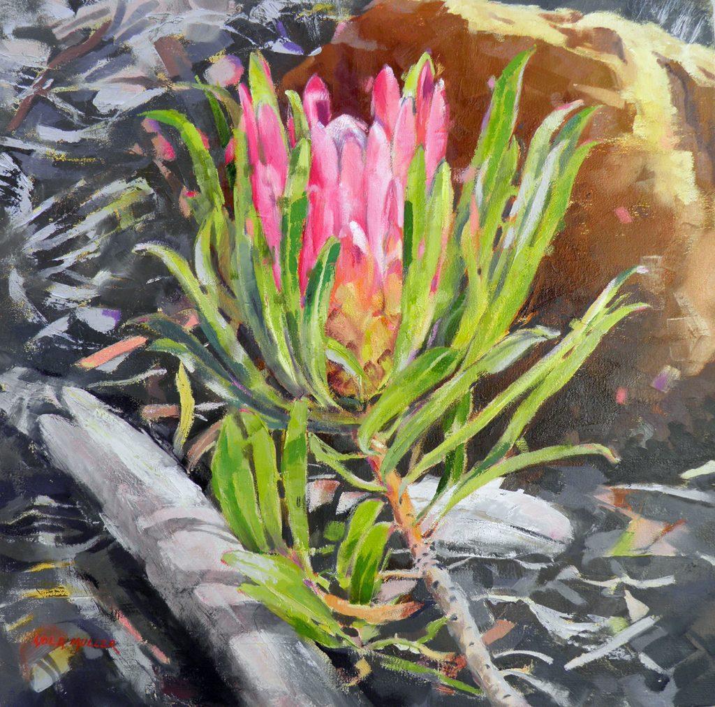 Protea Susannae 650x650 Oil