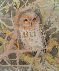 WC. Barred owl 500x390