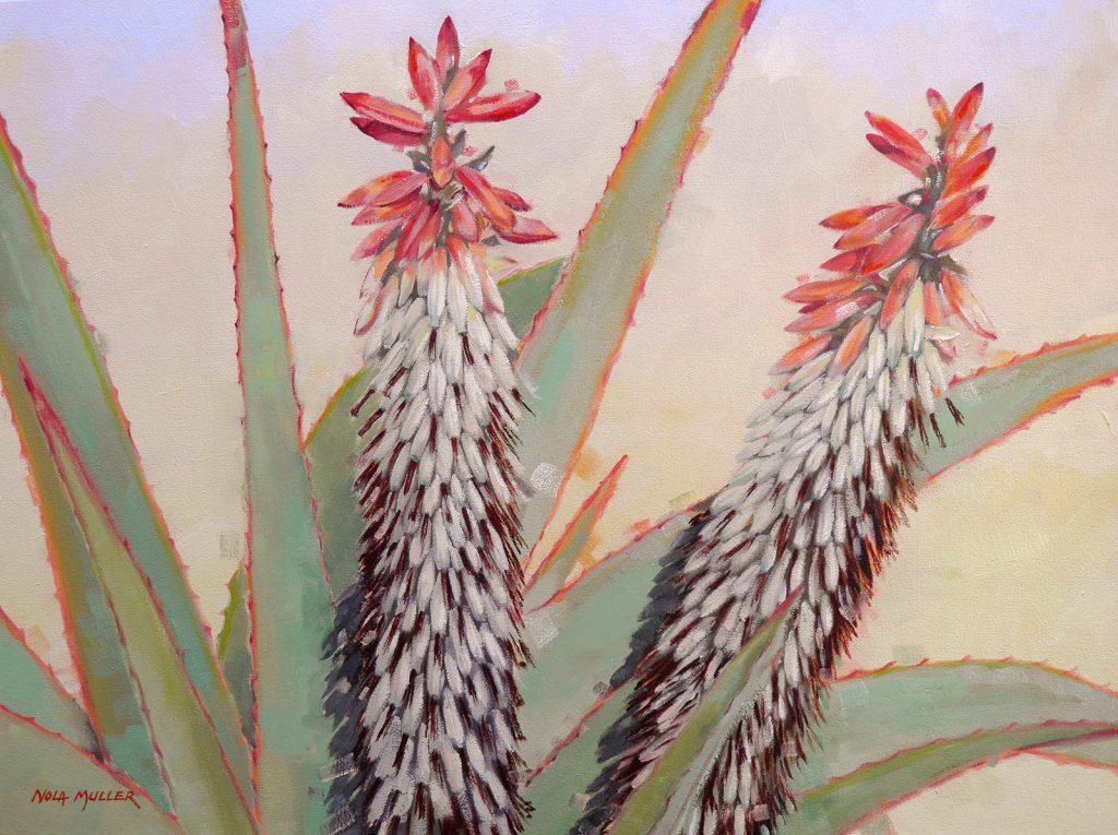 Aloe Speciosa 600x800 oil