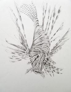 Drawing. Fish 330x280